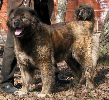 dangerous breeds of dogs should be banned essay